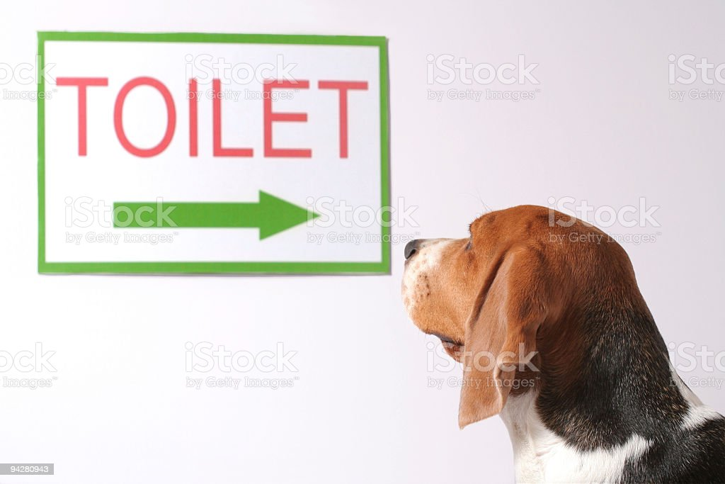 Looking for a toilet stock photo