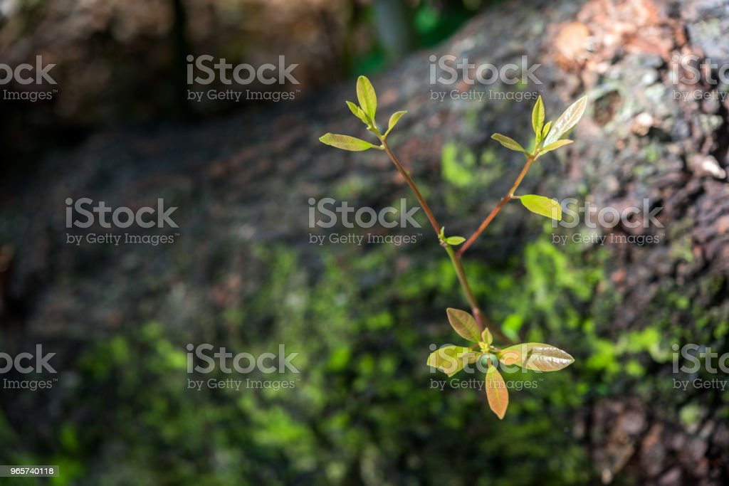 Looking for light - Royalty-free Aging Process Stock Photo