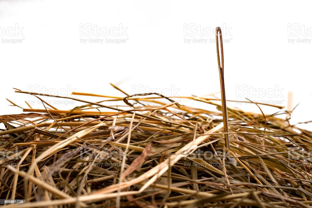 Looking for the needle in the haystack stock photo
