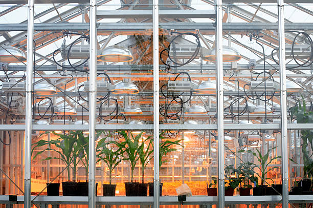 Looking into a modern greenhouse stock photo