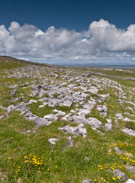 Looking North, Northwest across the slopes below Dun Aonghasa (Dun Aengus), Inishmore The view north, northwest from the path to Dun Aonghasa (Dun Aengus).  In early June, looking across wildflowers, karst landscape, walled fields, farms, the North Atlantic Ocean, coast of Connemara and the 12 Bens (12 Pins) mountains.  Note the doorway (with long lintel) in the surrounding wall, to left of center in middle distance.  Aran Islands, County Galway, Ireland. michael stephen wills aran stock pictures, royalty-free photos & images