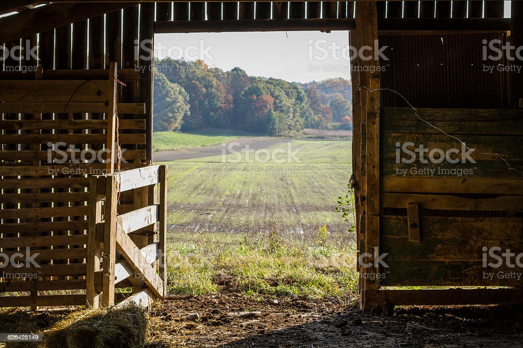 Looking Out a Barn Door stock photo