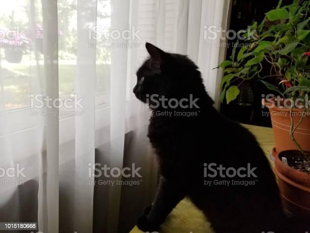 Looking out the window picture id1015180668?b=1&k=6&m=1015180668&s=612x612&h=ccemwsc5fzj6bogrcsv q7tbc3sajlcsw 2jrn9ro3i=