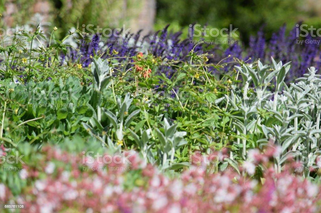 Tittar över en blomsterrabatt, naturliga bakgrundsbild royaltyfri bildbanksbilder