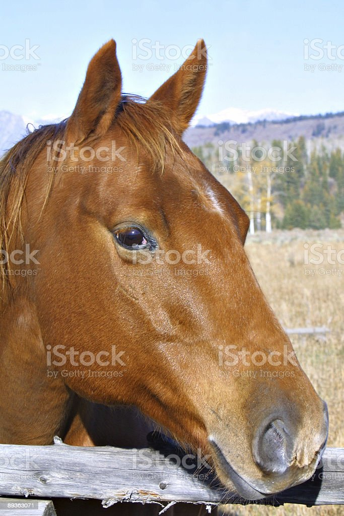 Looking over the fence royalty-free stock photo