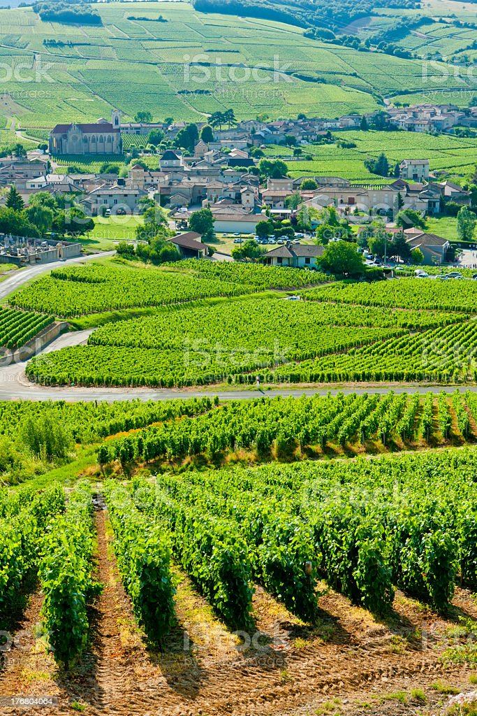 Looking over the fields in Burgundy, France stock photo