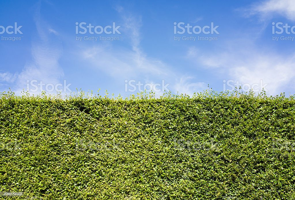 Looking over the hedge stock photo