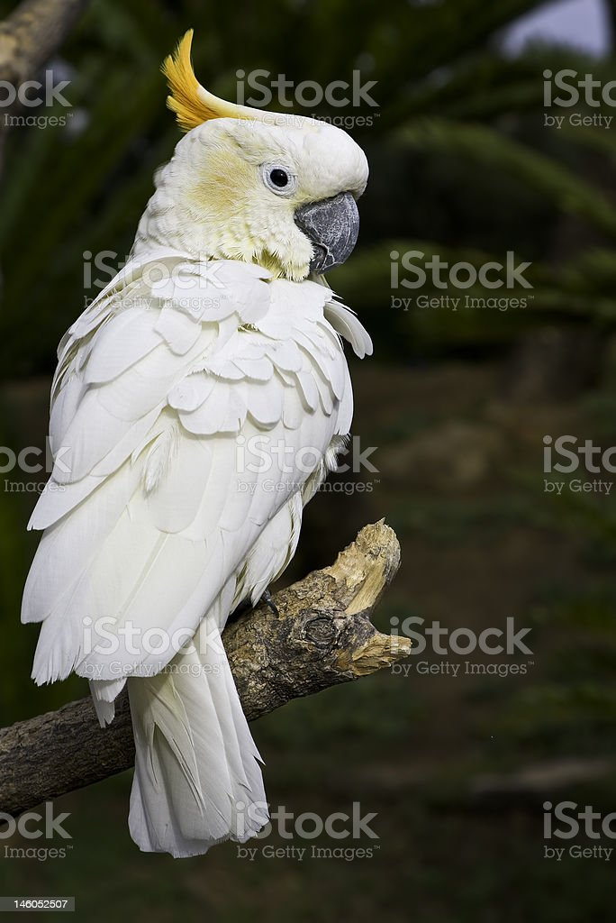 Looking over the shoulder royalty-free stock photo
