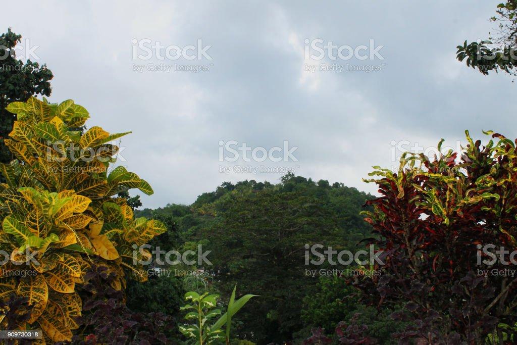 Kijkend door de kleurrijke tropische bomen in de jungle gedekt heuvel, Nine Mile, Jamaica. foto