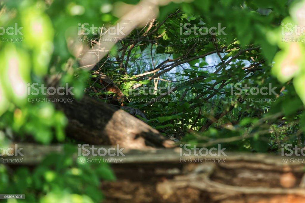 Looking through the forest zbiór zdjęć royalty-free