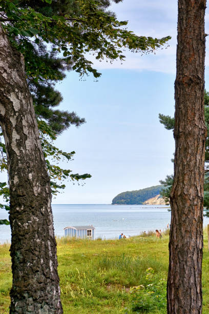 looking through the trees at the wedding location on the baltic sea beach in binz. registry office on the island of rügen. mecklenburg-vorpommern germany - hymen stock photos and pictures
