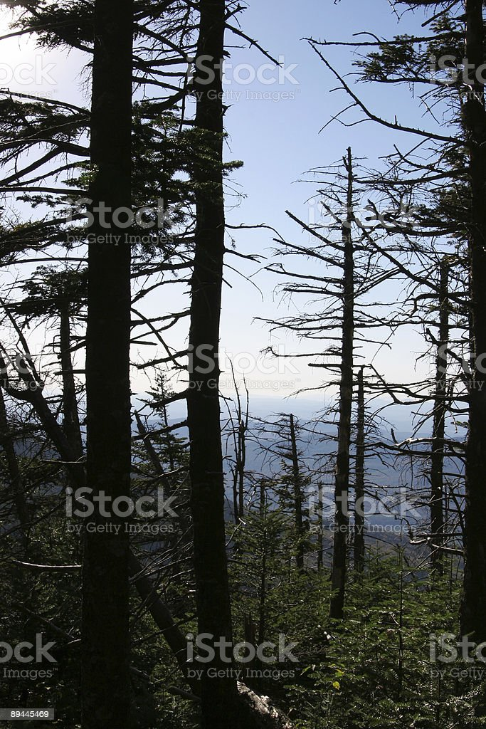 Looking Through Trees At Mountains Near Franconia Notch royalty-free stock photo