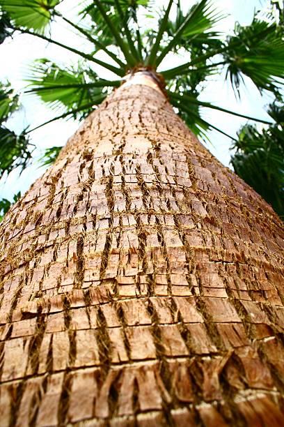 suchen sie sich ein palm tree - jake*s stock-fotos und bilder