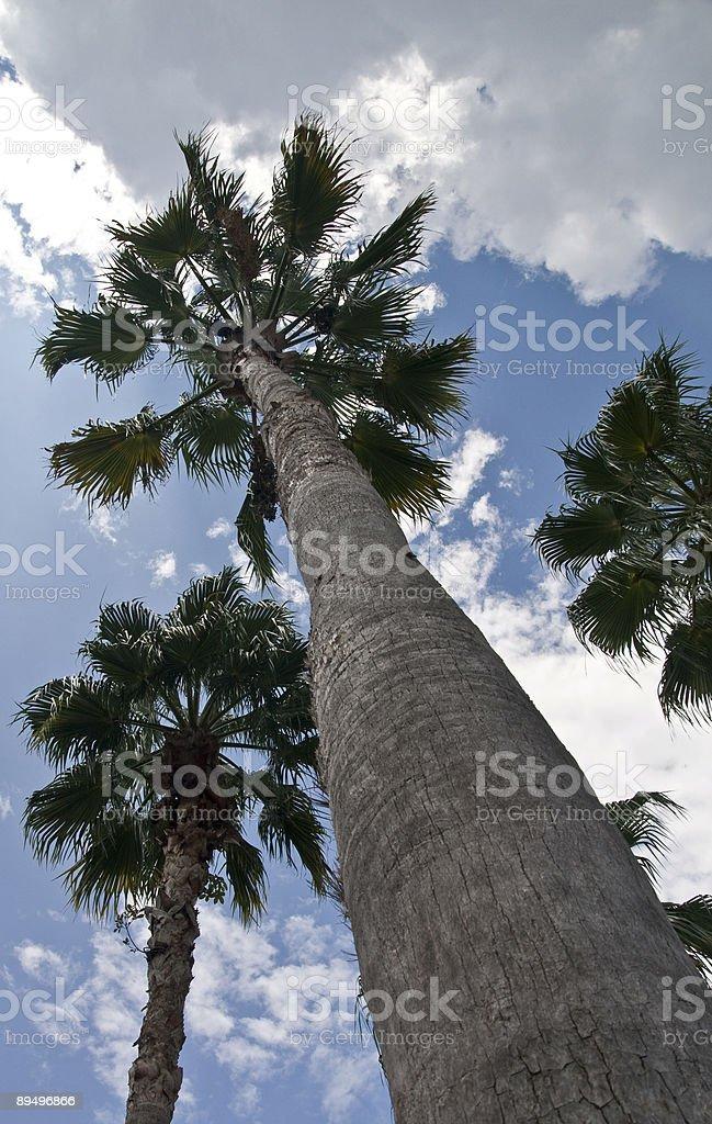 Patrzeć w górę na palmy zbiór zdjęć royalty-free