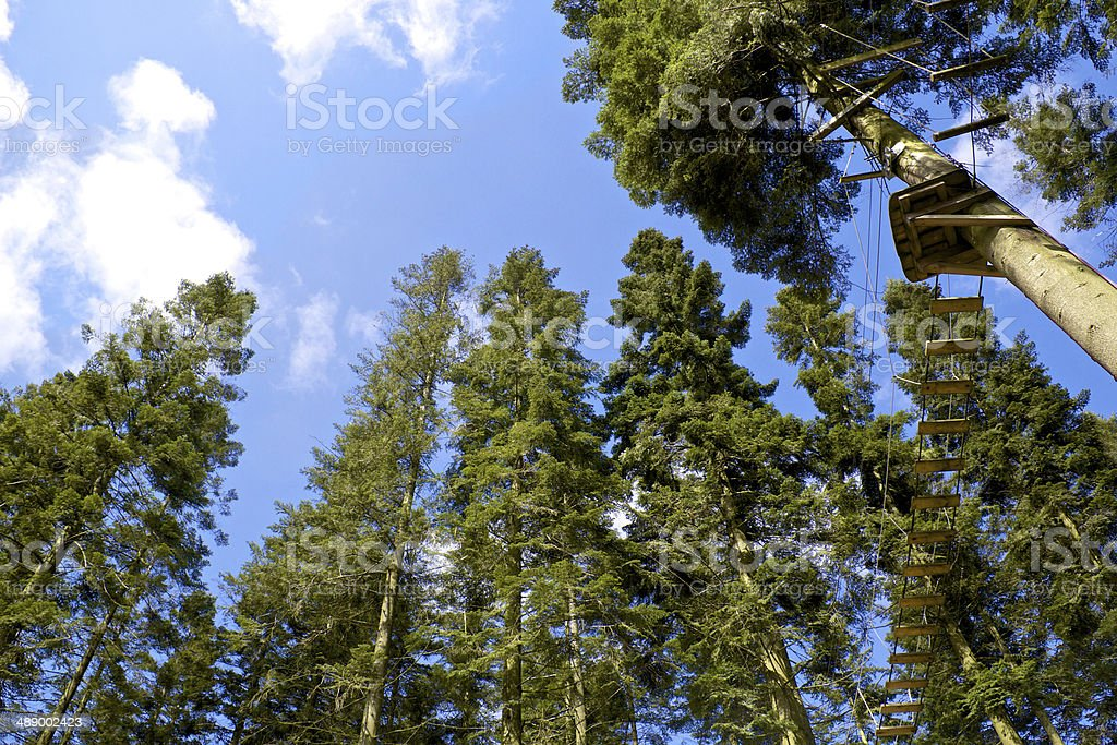 Looking up at rope bridge in lush trees stock photo