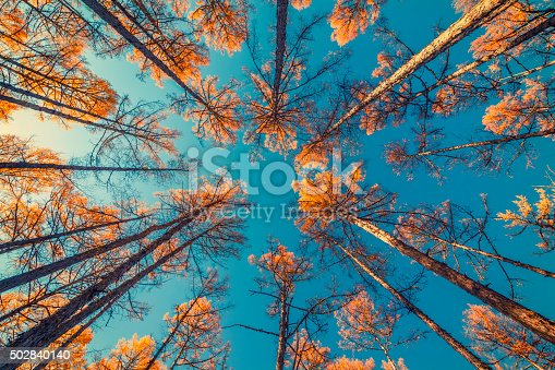 looking up at trees and clear blue sky