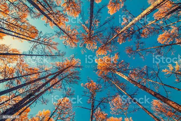 Photo of looking up at trees and clear blue sky