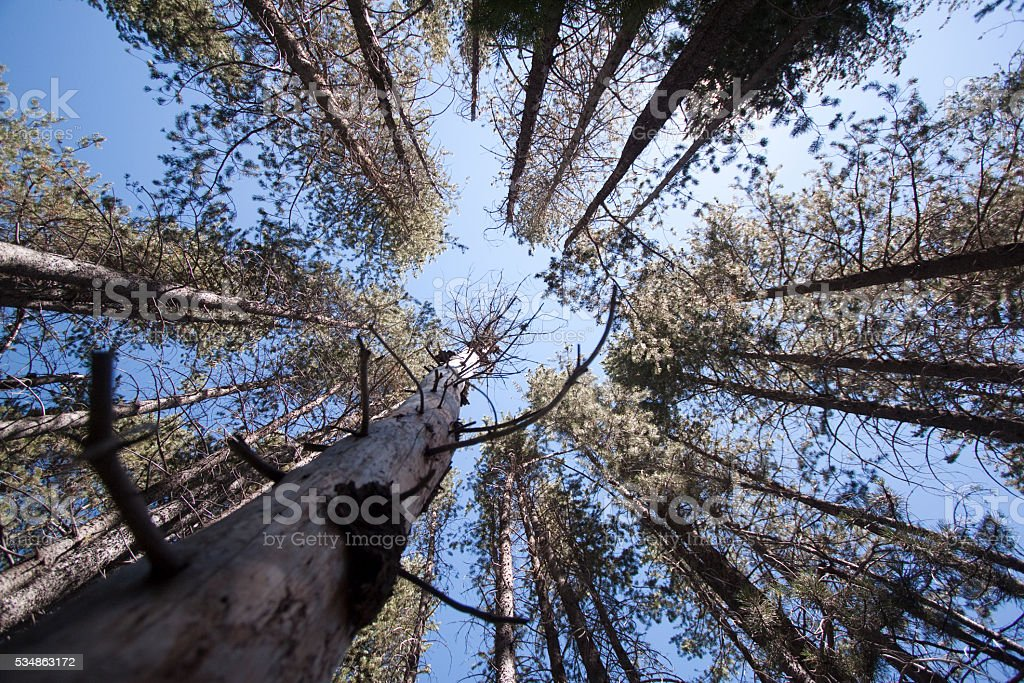 Looking up at trees stock photo