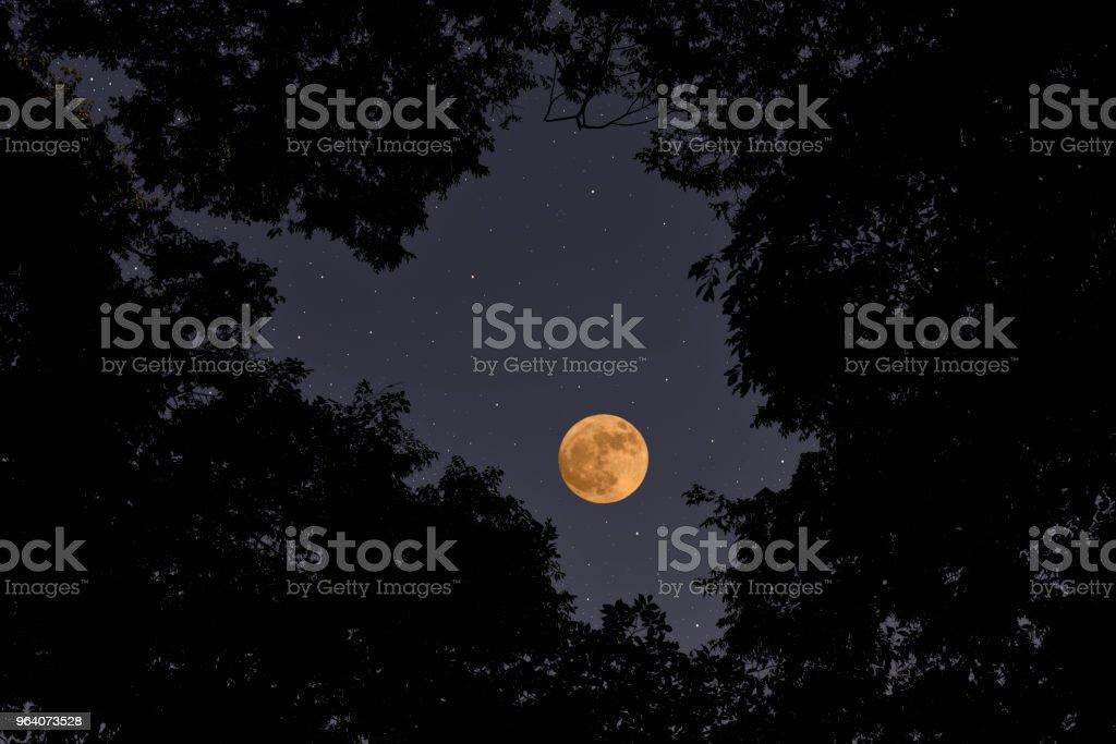 満月の梢を見上げてください。 - オレンジ色のロイヤリティフリーストックフォト