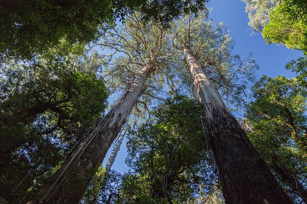 Suchen Sie sich in den zwei majestätischen Berge Ash Bäumen – Foto