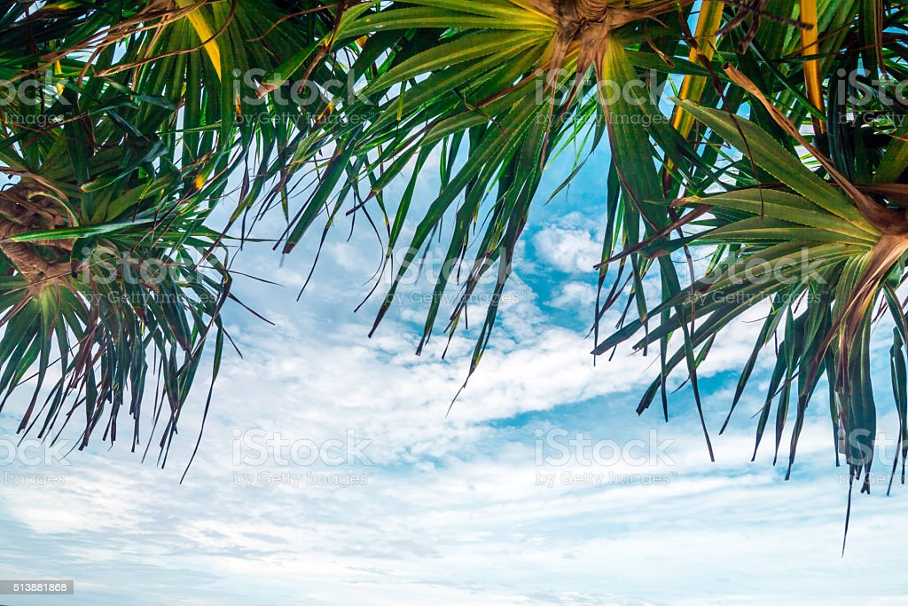 Looking up in a palm tree stock photo