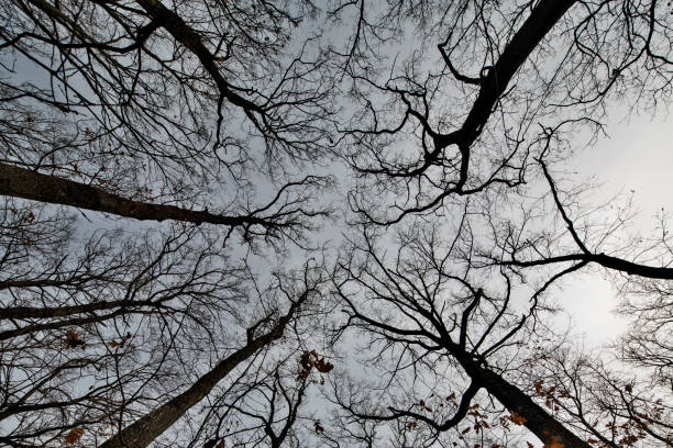 looking up in the forest - low angle view foto e immagini stock
