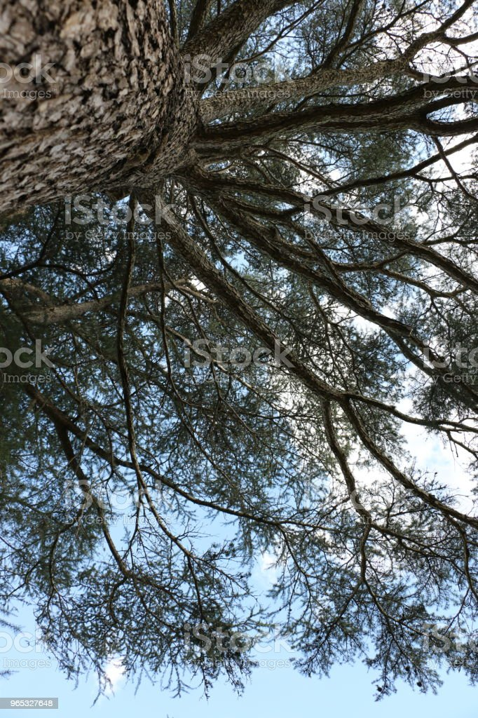 Looking up into silhouetted branches with clouds and blue sky zbiór zdjęć royalty-free