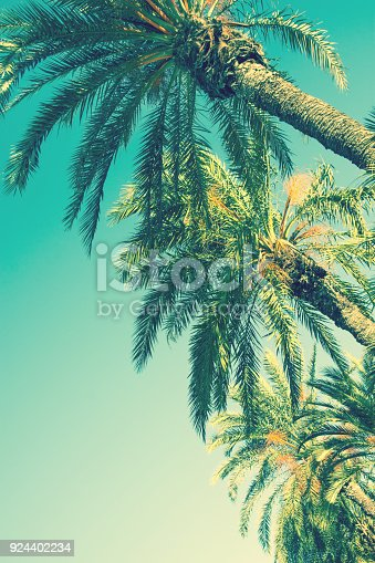istock Looking up Perspective on Row of Palm Trees on Toned Light Turquoise Sky Background. 60s Vintage Style Copy Space for Text. Tropical Foliage. Seaside Ocean Beach Vacation. Hip Funky Vintage Toning 924402234