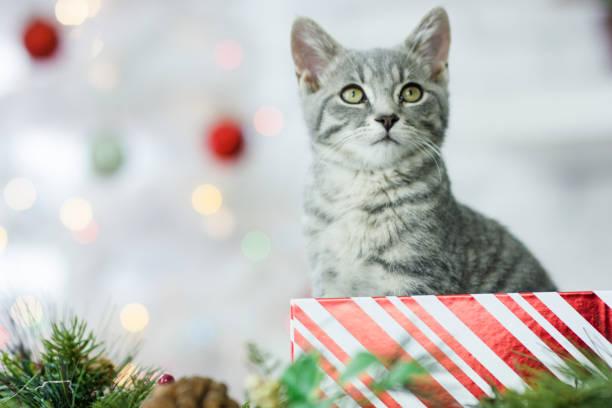 blick nach oben - katze weihnachten stock-fotos und bilder
