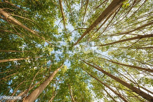 istock Looking Up Trees 1058328708