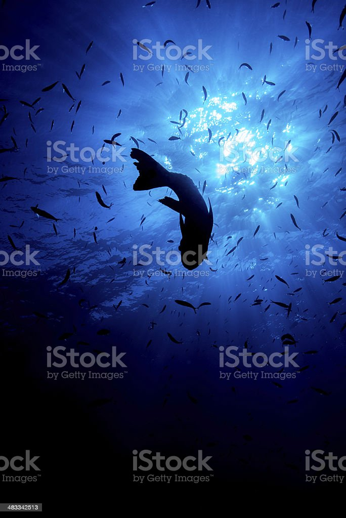 Looking up underwater fish stock photo