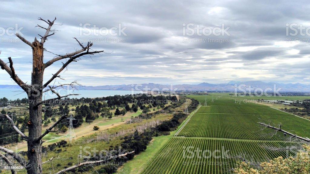 Lookout vineyards winery sauvignon blanc stock photo