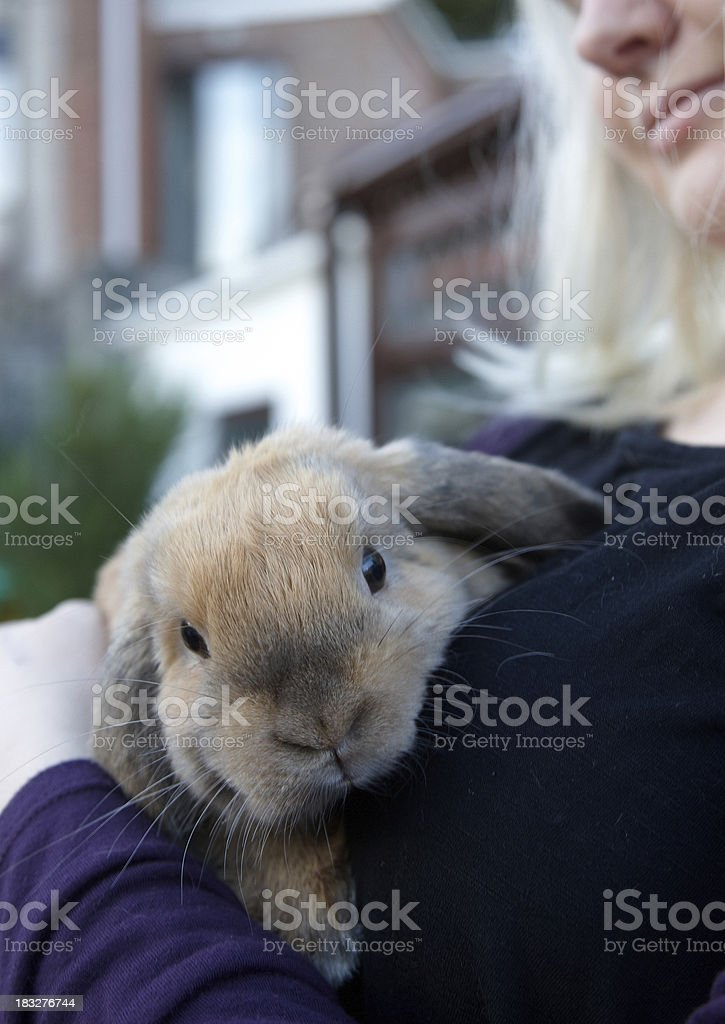 Lop eared rabbit with young woman stock photo