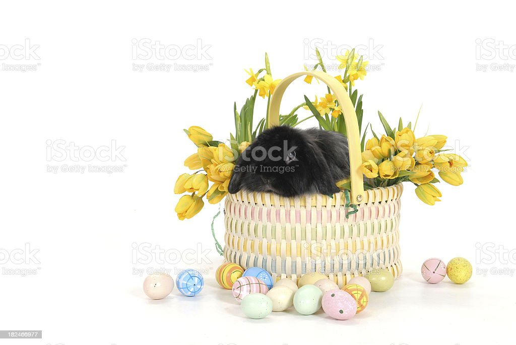 Lop-Eared Bunny Basket royalty-free stock photo
