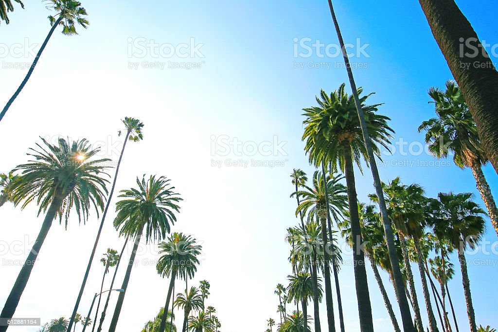 Los Angeles California Palm Trees stock photo