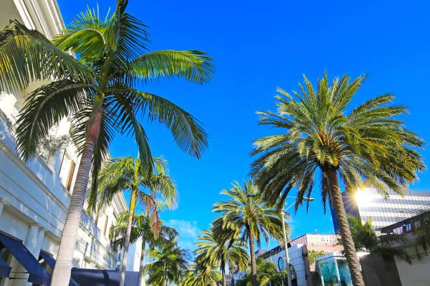 Los Angeles California Palm Trees stock photo