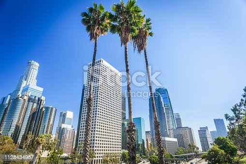 Los Angeles, California, USA downtown cityscape. Beautifull three tall palms in the center