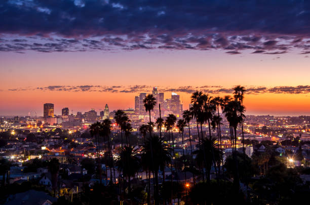 Los Angeles downtown Beautiful night of Los Angeles downtown skyline and palm trees in foreground hollywood california stock pictures, royalty-free photos & images