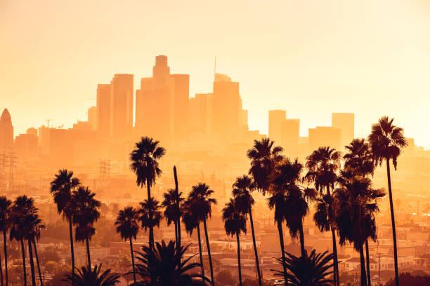 los angeles gyllene timmen stadsbilden över downtown skyskrapor - palm bildbanksfoton och bilder