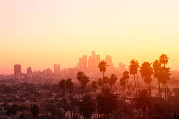 los angeles palm sunset - los angeles стоковые фото и изображения