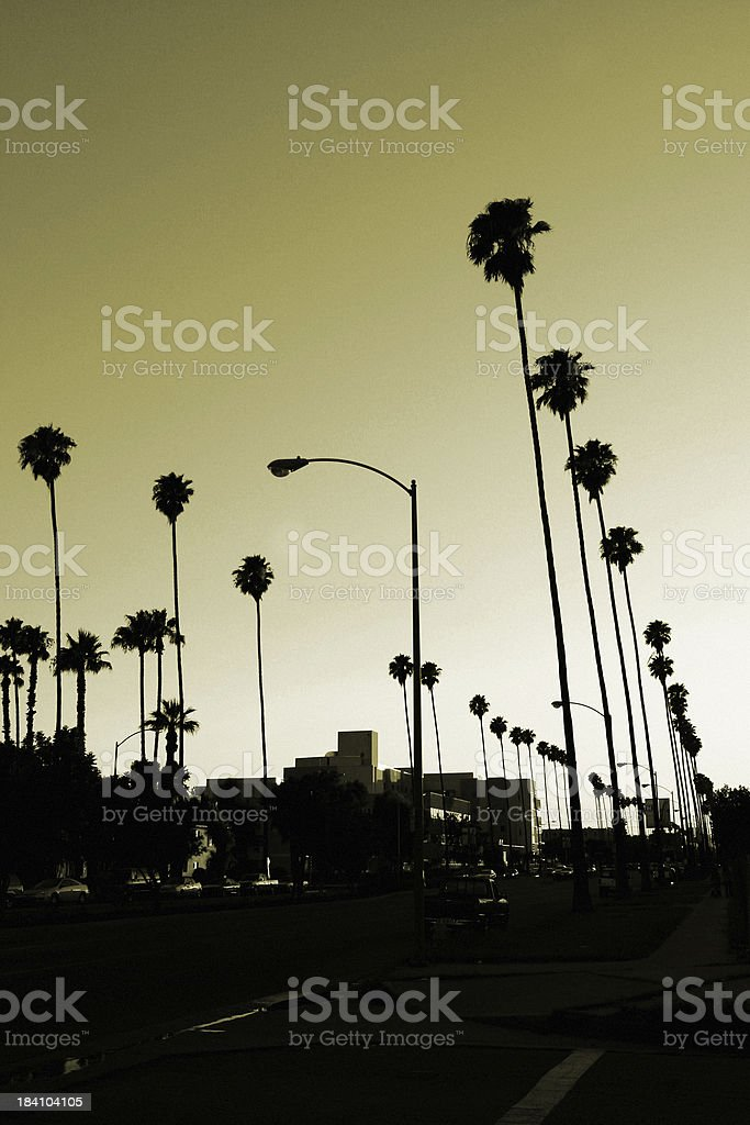 Los Angeles palm trees at sunset. stock photo
