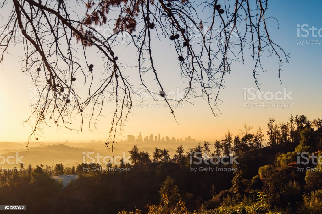 Los Angeles skyline at sunrise with trees in foreground, California stock photo
