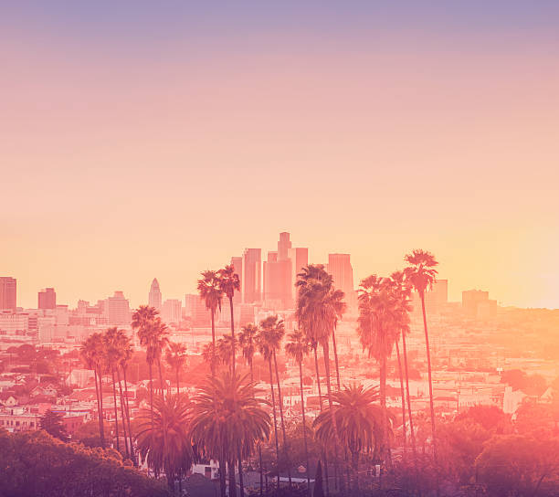Los Angeles sunset scene with palm trees Downtown Los Angeles hollywood california stock pictures, royalty-free photos & images