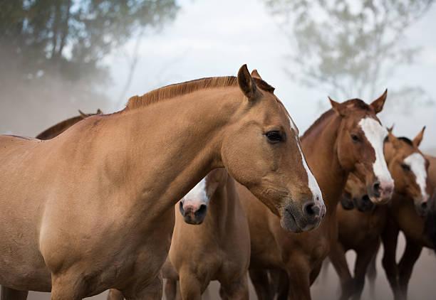 Los caballos de la estancia picture id469510102?b=1&k=6&m=469510102&s=612x612&w=0&h=jjmk5htaquzjtlzt793ywswyiziz9f ehhy k98aazs=