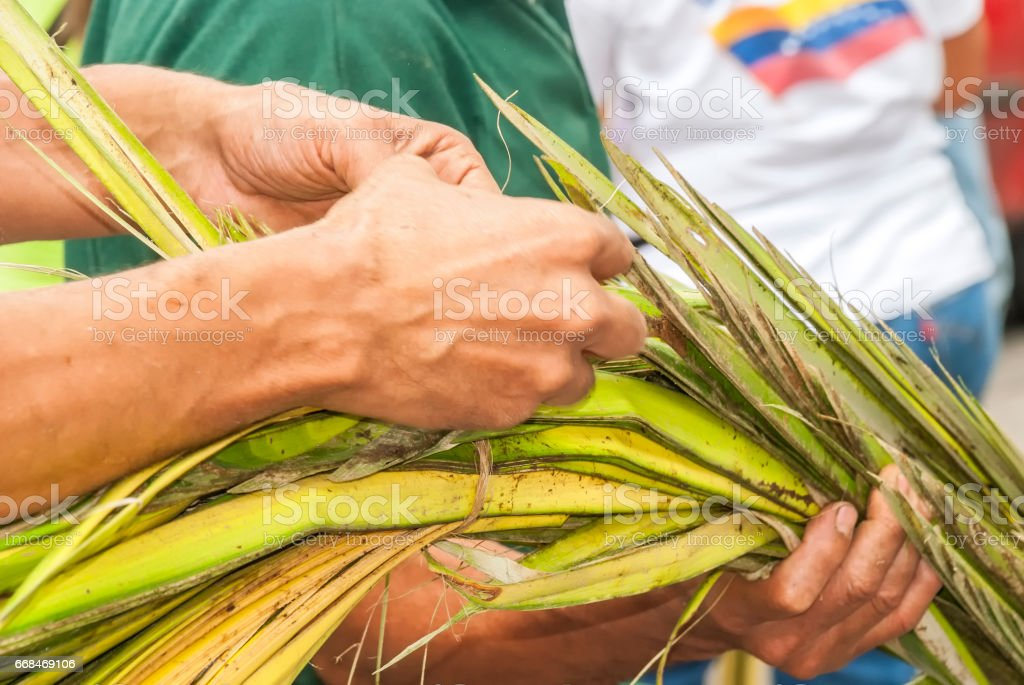'Los Palmeros de Chacao' carrying palms stock photo