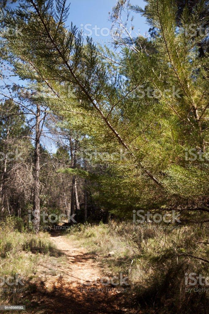 Los Ports natural park stock photo