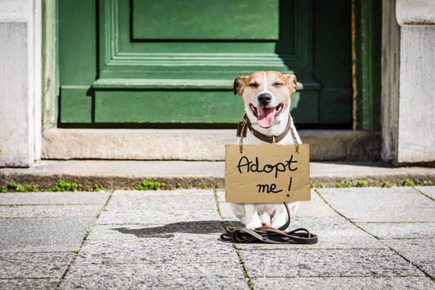 Lost and homeless abandoned dog picture id837572972?b=1&k=6&m=837572972&s=612x612&w=0&h= apyjjgagegvjsvj duj58cw jcox2yu wp0jwit1v8=