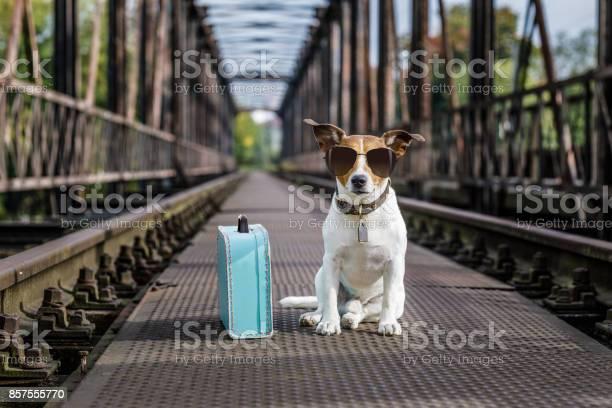 Lost and homeless abandoned dog picture id857555770?b=1&k=6&m=857555770&s=612x612&h= z1opqt5ycqyoczaxtjpwupp4tzgcsd37q cwmtj7jm=