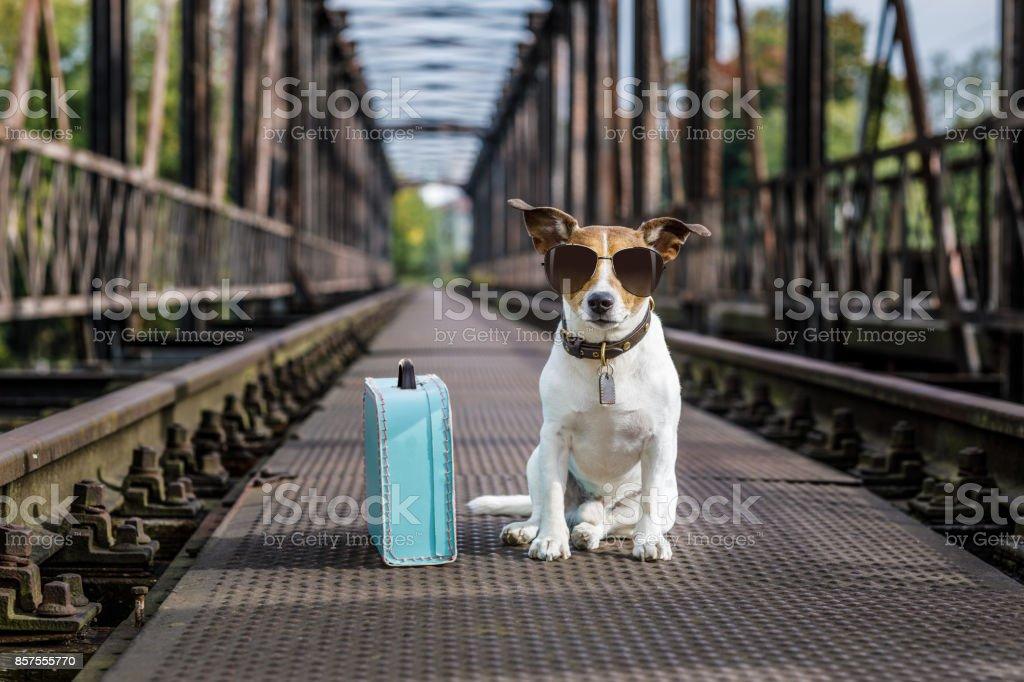 verloren und heimatlos verlassenen Hund – Foto