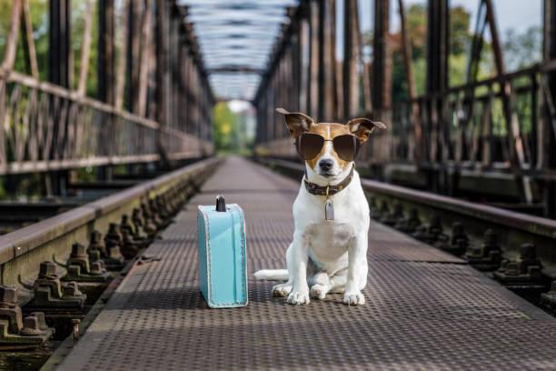verloren und heimatlos verlassenen hund - alles hinter sich lassen stock-fotos und bilder